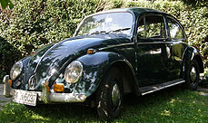 featured_beetle