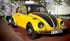featured_bumblebee